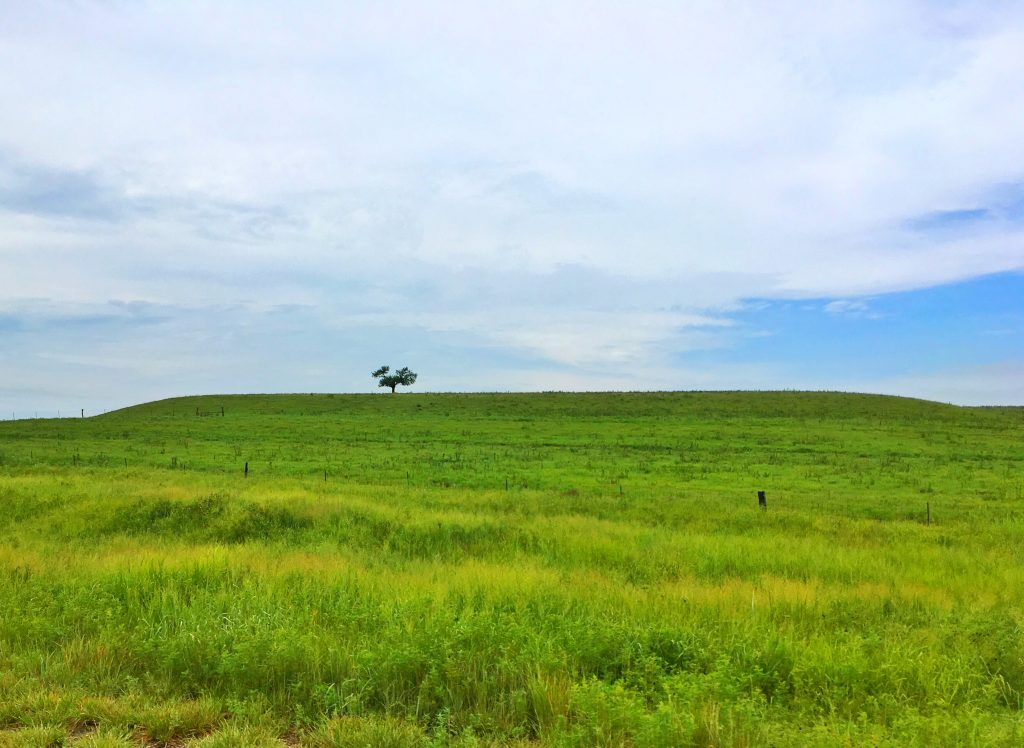 Lone tree in the Flint Hills, Chase County, Kansas
